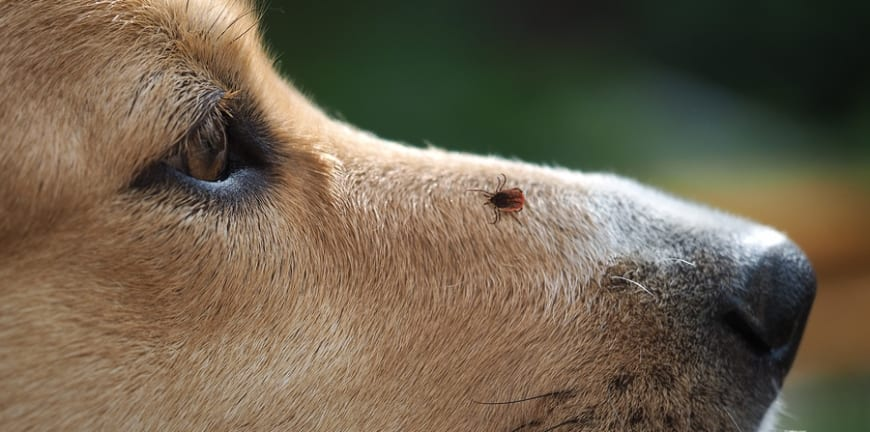Check for ticks on your dog