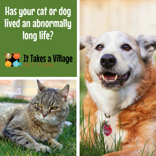 https://ittakesavillagenh.com/wp-content/uploads/2020/07/Has-your-cat-or-dog-lived-an-abnormally-long-life_-2-500x500.png