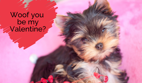 https://ittakesavillagenh.com/wp-content/uploads/2021/01/Woof-you-be-my-Valentine_-458x269.png